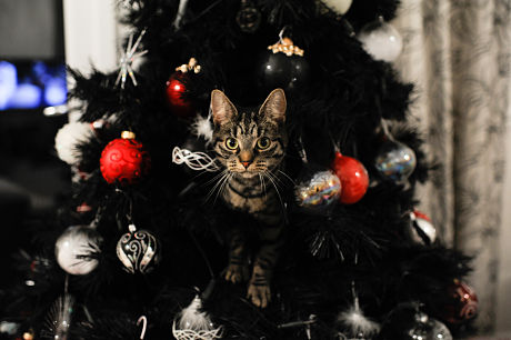 Cat up a Christmas tree